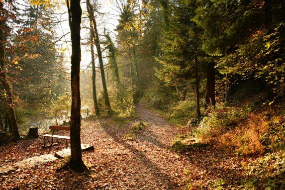 Kurzurlaub zum Wandern in Brandenburg. Herbstliche Wanderrouten in Brandenburg