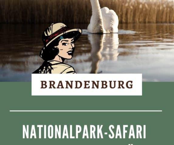 Im Nationalpark Unteres Odertal kannst du eine Safari zu singenden Schwänen unternehmen. Ein Familienausflug der besonderen Art in Brandenburg. Alle Infos