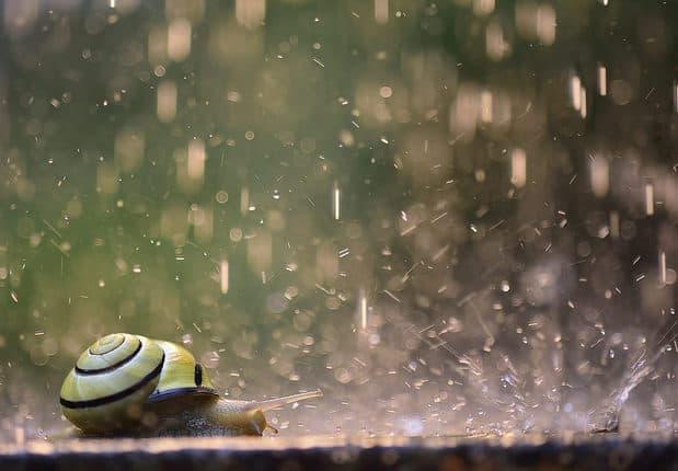 """Fotowettbewerb """"Augenblick Natur!"""" 2020 vom Verband Deutscher Naturparke. Hier gibts mehr Informationen zum Fotowettbewerb der Naturpake Deutschland."""