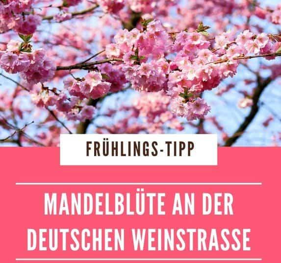 Die Mandelblüte bedeutet Frühlingserwachen. Mit den Mandelbäumen kommt die Deutsche Weinstraße in Feierlaune. Veranstaltungstipps rund um die Mandelblüte.